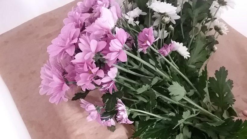 Experimentem amb flors!